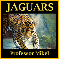 Jaguars - Cover Small